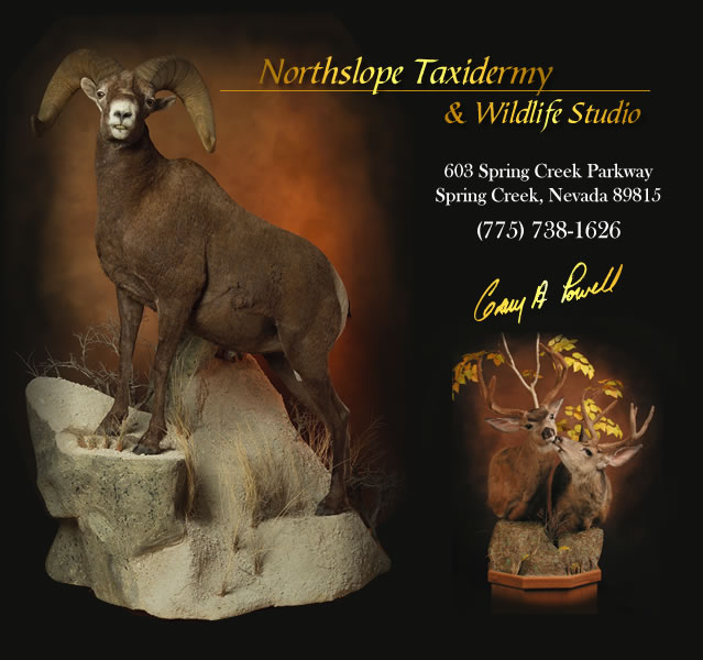 Northslope Taxidermy